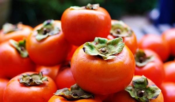 خرید نهال خرمالو گوجه