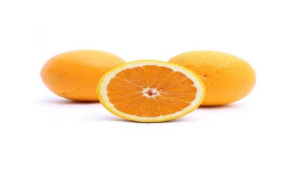 خرید نهال پرتقال والنسیا