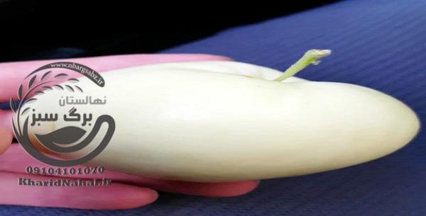 نهال سیب سفید قندی
