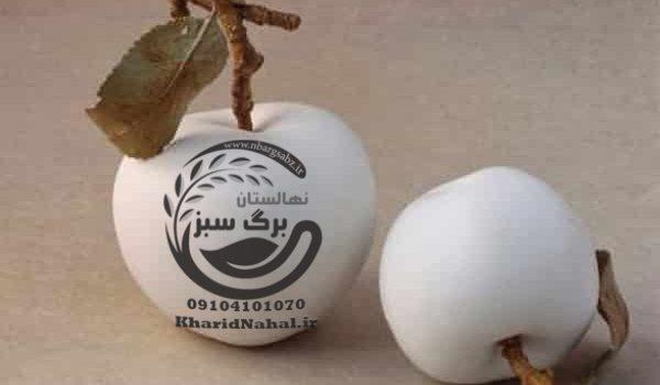 نهال سیب سفید