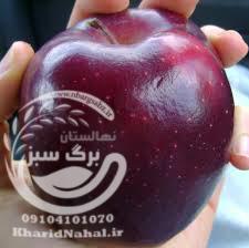 نهال سیب قرمز مراغه